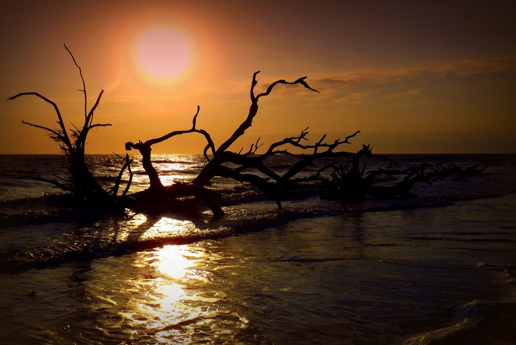 Take in the sunset on Jekyll Island's stunning Driftwood Beach.